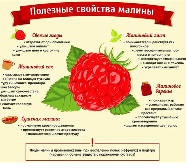 povyshaet ili ponizhaet davlenie malina svojstva top 10 receptov protivopokazaniya