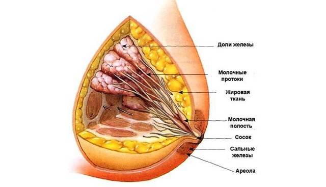 simptomy i lechenie fibrozno zhirovoj involjucii molochnyh zhelez