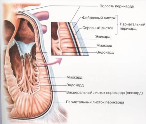 simptomy miokardiodistrofii prichiny ejo vozniknoveniya diagnostika i lechenie