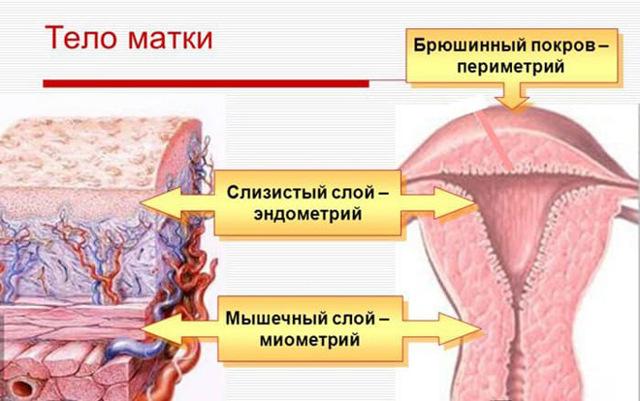 vozmozhno li polnostju vylechit endometrit matki u zhenshhin i kakimi metodami ego lechat