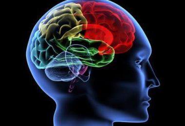 chem opasna lateroventrikuloasimmetriya mozga