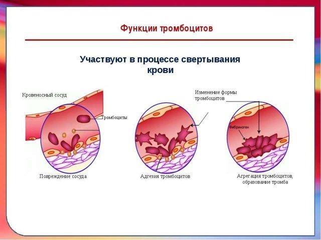 chto oznachaet povyshenie srednego obema trombocitov v krovi