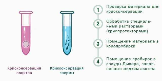 kriokonservaciya yajcekletok metod prodleniya reproduktivnoj molodosti