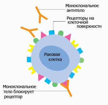 princip targetnoj terapii raka molochnoj zhelezy primenyaemye preparaty i effektivnost