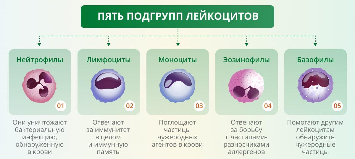 snizhenie lejkocitov v krovi lejkopeniya prichiny i posledstviya