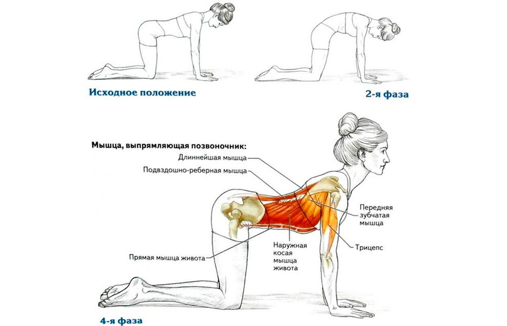ukreplenie myshc spiny s pomoshhju gimnastiki