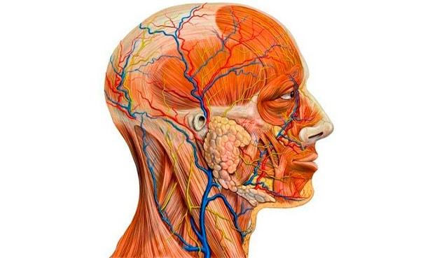 kak issledovat sosudy golovnogo mozga i shei u vzroslogo 11 osnovnyh metodov diagnostiki