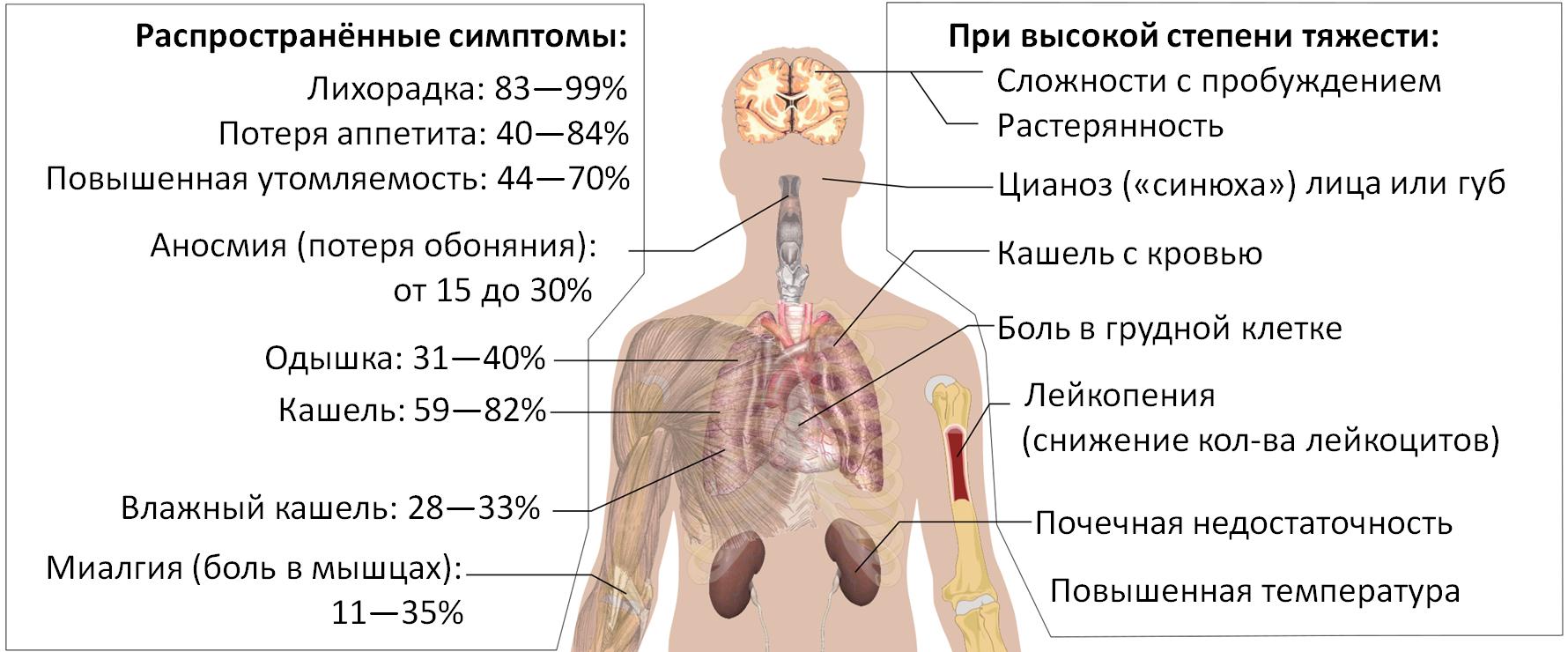 lejkocity pri koronaviruse o chem govorit snizhenie i povyshenie immunnyh kletok